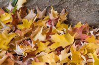 Leaf buildup on a lawn can cause the lawn to die over time.