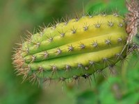 Cactus can be grown indoors.