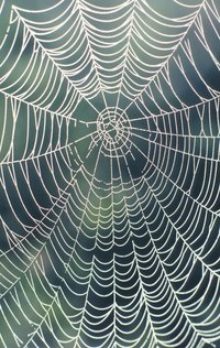 A realistic-looking spider web should have the geometric lines of a real web.