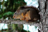 A section of pipe can be transformed into a simple squirrel trap.