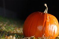 A variety of insects can threaten the health of your pumpkin plants