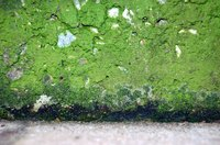 Mold, although found in nature, can be potentially hazardous when found growing indoors.