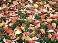 Save time and compost more efficiently with a DIY leaf shredder.