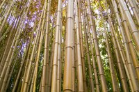 Bamboo's natural hollow reeds can be used to create an eye-catching waterfall.