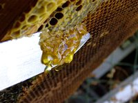 Queen bee excluders limit access to upper levels of a hive to worker bees only.