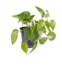 Indoor plants add warmth to your home.