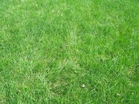 Grow grass in New Jersey in the spring or early fall.