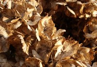Dead leaves make up the bulk of many compost bins.