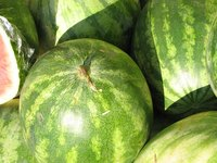 Watermelons are one vine plant that grow well above black tarps.