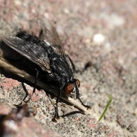 Flying bugs, such as flies, are repelled by certain plants.