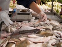 Selecting the freshest fish to freeze