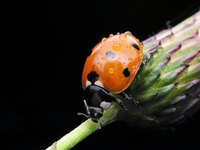 Ladybugs are a gardener's friend and should be welcomed.