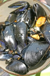 Store mussels overnight properly to keep them alive.