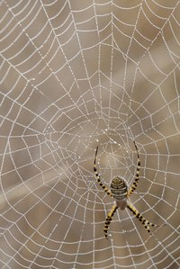 You can make a spider web from hot glue for Halloween decorations.
