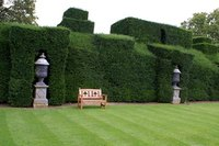 Choose varieties of shrubs for the type of hedge you envision.
