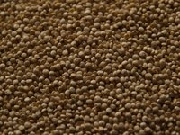 Quinoa comes from a species of goosefoot that has been cultivated in the Andes since the time of the Incas.
