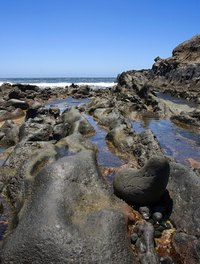Intertidal zones can contain vast tracks of shoreline or just a narrow strip.