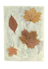 Collect a variety of fallen leaves.