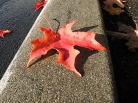 The natural pigment in a leaf can leave colored stains on concrete.