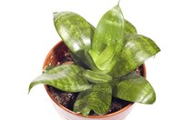 Beautiful indoor plants can be a source of pain and annoyance.