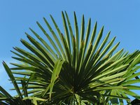 Use palm fronds to decorate around your home.