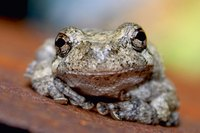 Frogs have a long symbolic history, both positve and negative.