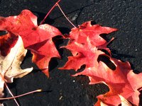 Leaves fall off trees so they can save energy in the winter when there is less sunlight.