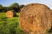 Hay bales that go uncovered in wet weather can experience nutrient loss.