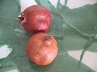 Utah Sweet pomegranate trees produce tasty pink fruit.