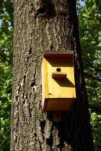 Birdhouses attract a variety of birds.