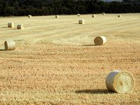 Prepare your fields for an abundant hay crop.