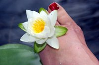 Water Lilies are the queens of the water garden or fish pond.