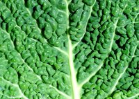 Collard greens grow well throughout all regions of Virginia.
