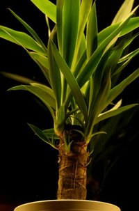 Indoor plants that grow in dim light