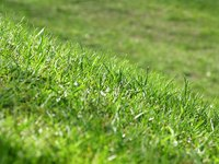 Fertilizers supply plants and lawns with necessary nutrients.