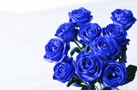 Give someone who loves the color blue a bouquet of blue roses.
