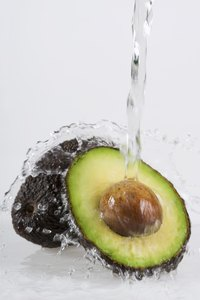 The avocado plant does not do well with too much or too little water.