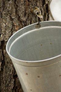A slow-cooker can concentrate sap to maple syrup, but it's time-consuming.