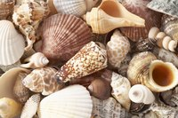 Pretty, colorful seashells can be used in many creative ways.