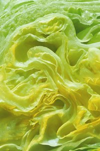 Iceberg lettuce keeps up to two weeks in the refrigerator.