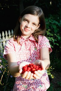 Fresh-picked raspberries fill summertime family memories.