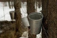 Harvested from maple trees, maple syrup is a natural sweetener.