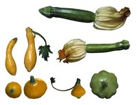 You can choose from over a dozen types of squash to grow in your garden.