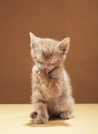 Cats' grooming habits prevent most cases of contact dermatitis.