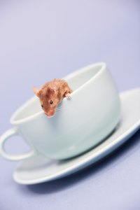 Several methods can help keep mice out of your house.