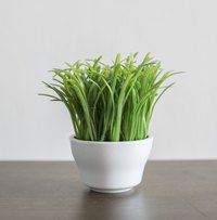 For a year-round touch of spring, start grass seeds in indoor containers every two weeks.