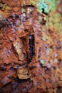 "Rust is not alive. It ""grows"" due to moisture and oxygen moving deeper into the metal."
