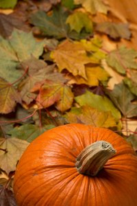 Use fresh pumpkin for pumpkin powder.