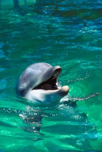 Make a dolphin model from papier-mache.