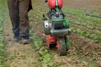 A tiller will uproot small weeds with no problem, causing them to dry out and die.